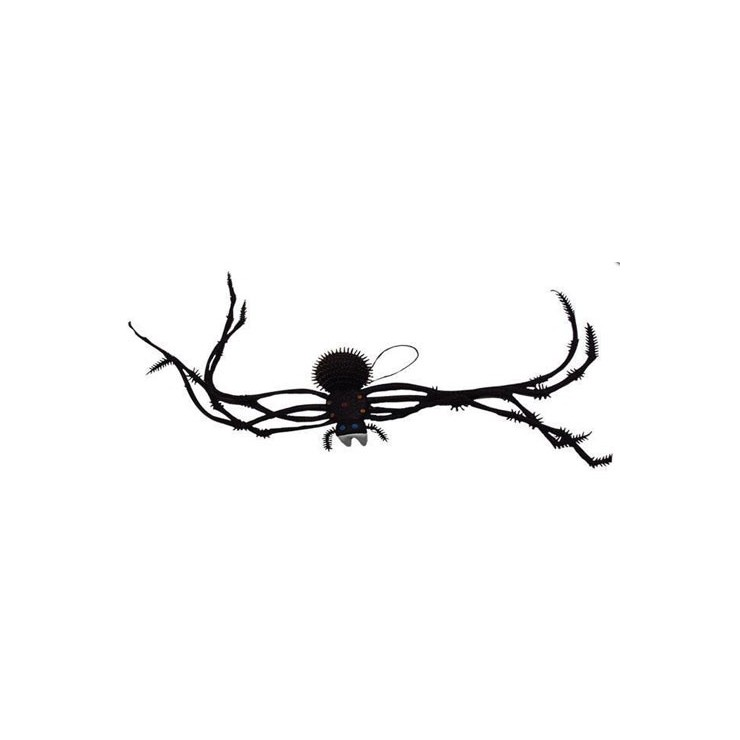 Araignée longue