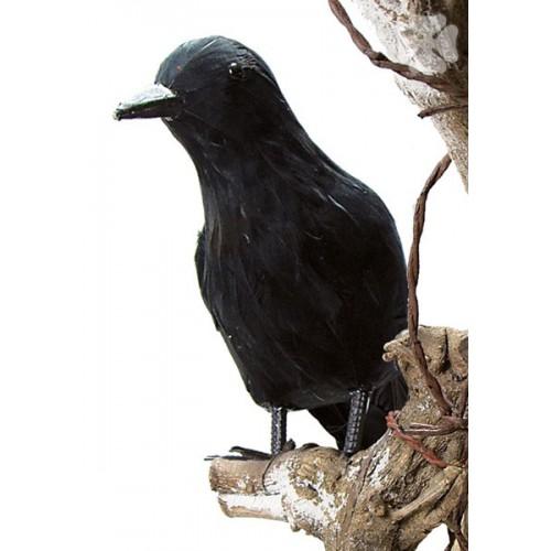 Corbeau 22 cm