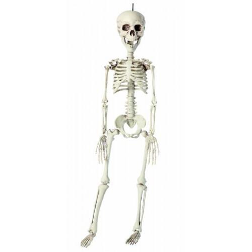 Squelette plastique 76 cm