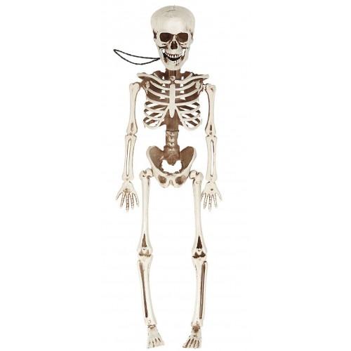 Squelette articulé 40 cm