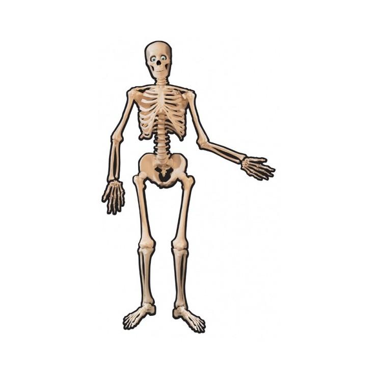 Squelette carton 134.6 cm
