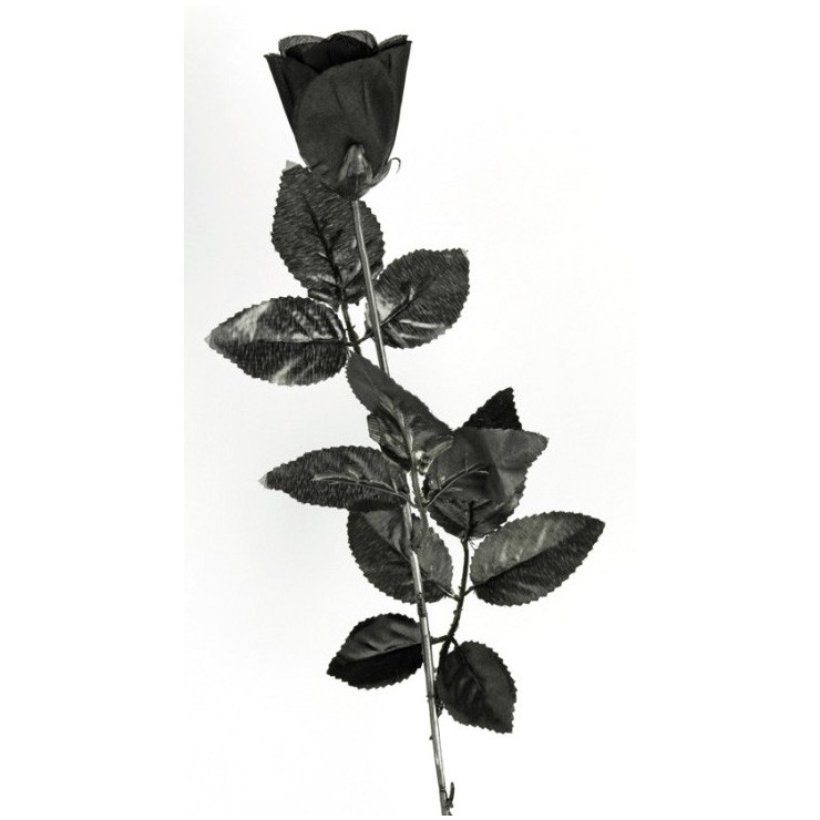 Rose noire