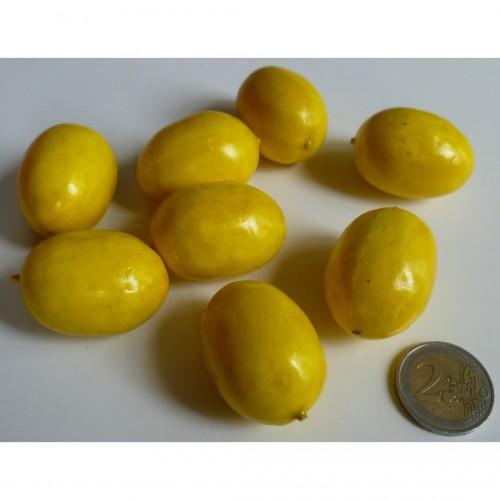 Petit citron
