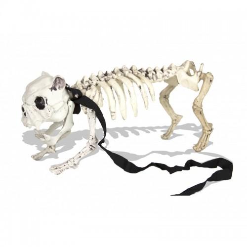 Squelette Médor